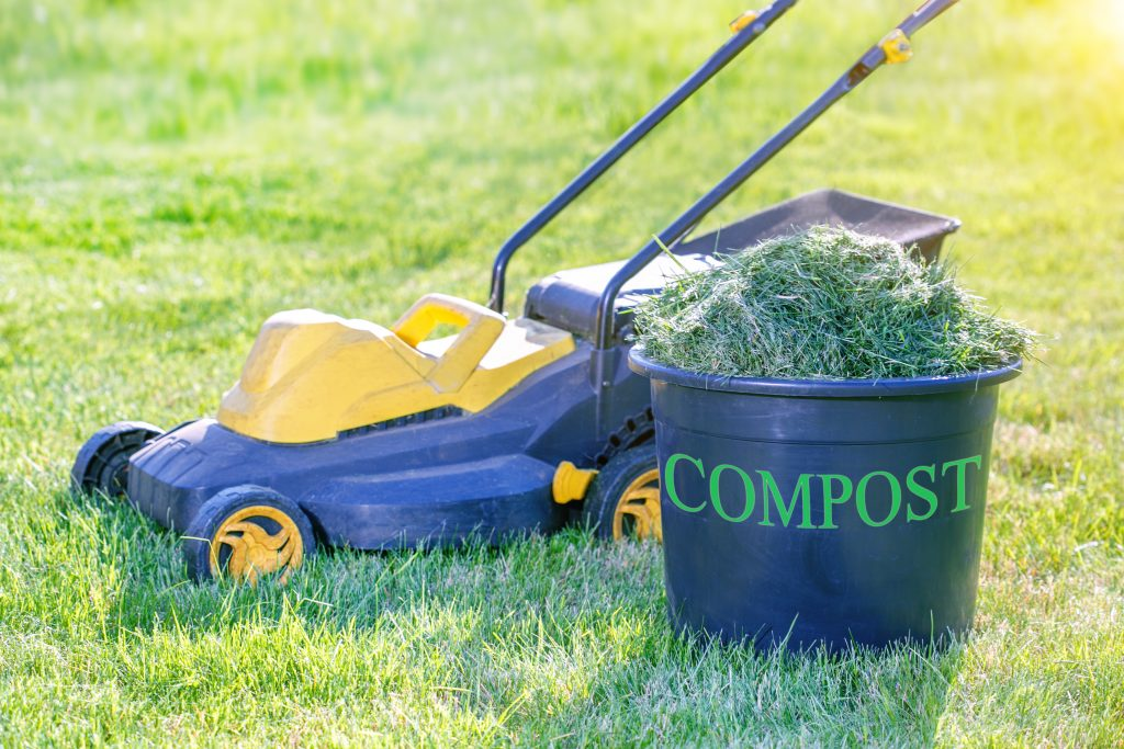 Compost Bin Full of Fresh Grass clipping on lawn in the garden. Sunny summer day.
