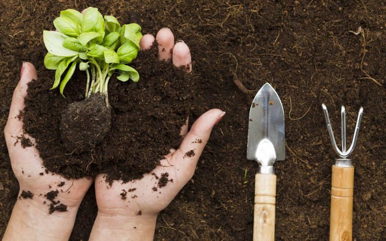 The Relationship With Your Garden Soil