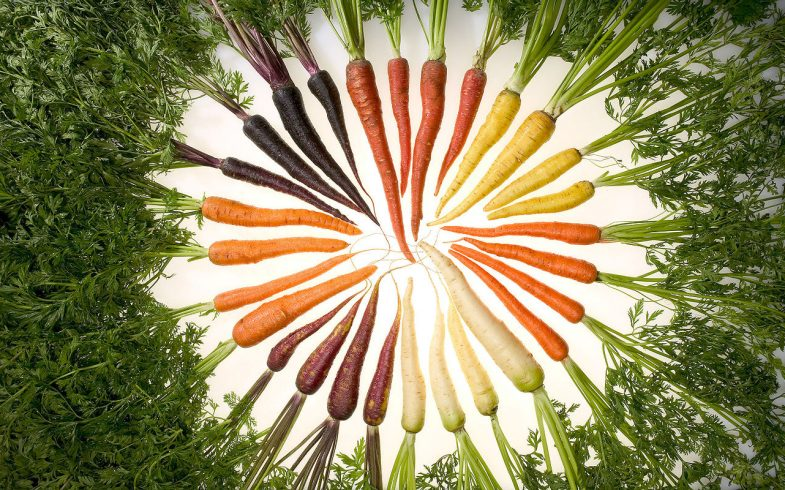 Carrots_of_many_colors and types grown in the garden
