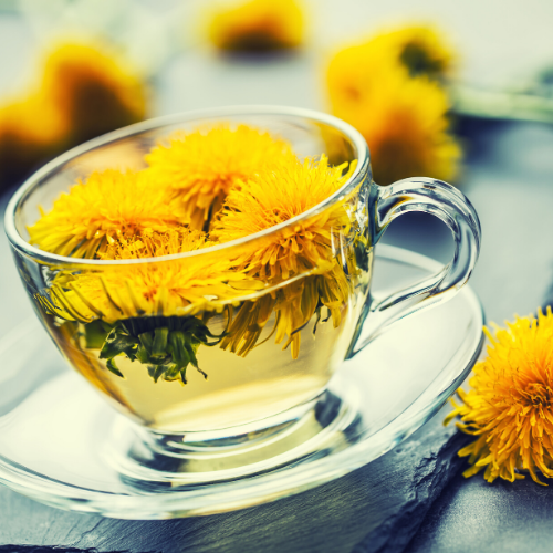 dandelion are a medicinal plant and make great tea