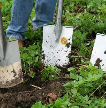 Working in the vegetable garden with spades
